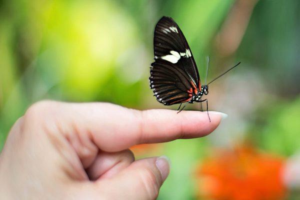 Una farfalla appoggiata sulla punta delle dita